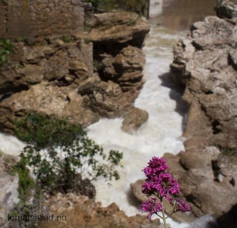 blomma och vattenfall