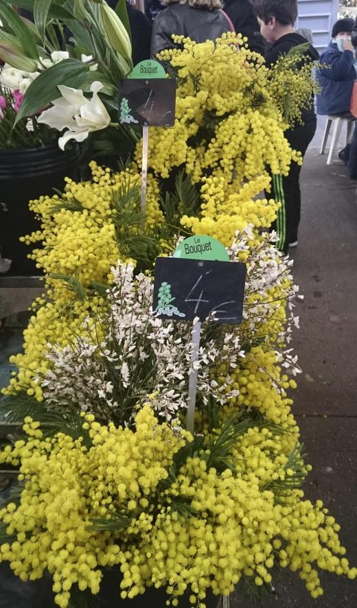mimosa till salu