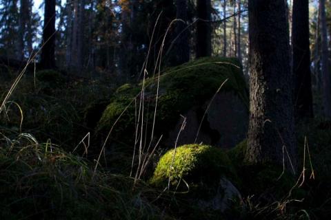 mossig-sten-4605