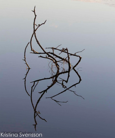 spegling i vatten