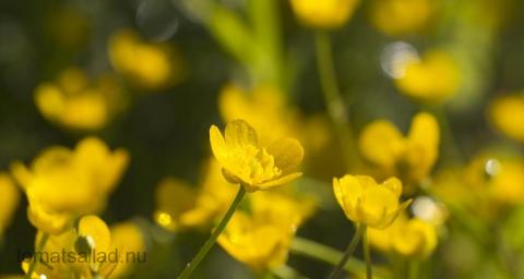 blomma-39831
