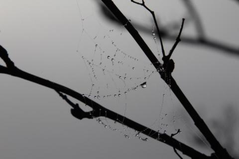 droppar på spindelväg