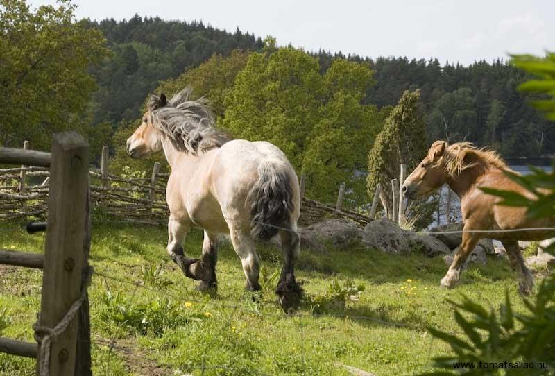 Hästar vid Äskhult by