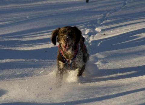 hund springer i snö november 2008