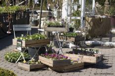 Blomlådor särö trädgård