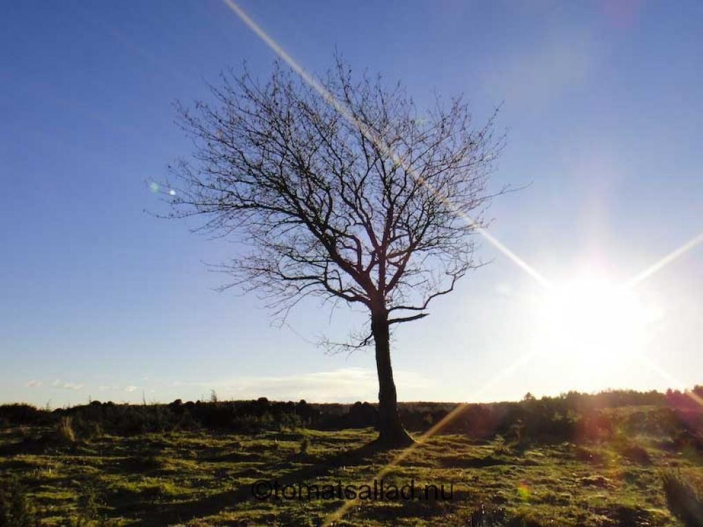 Fantastiskt träd i motljus