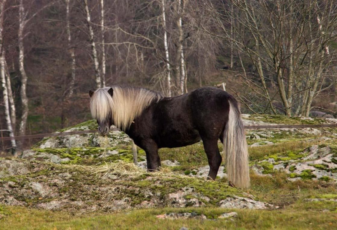 snygg häst