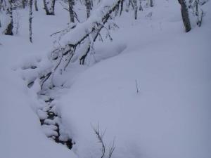 snöig vy längs skidspåret