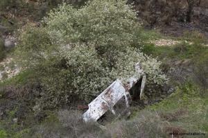 Bilvrak med blommande träd