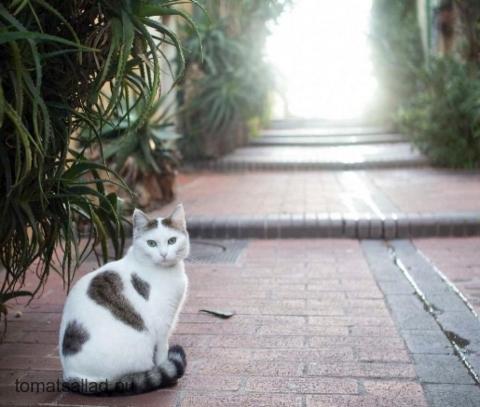 katt-8855