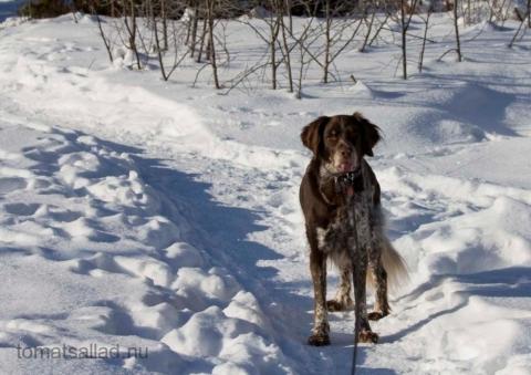 hundprom-0815