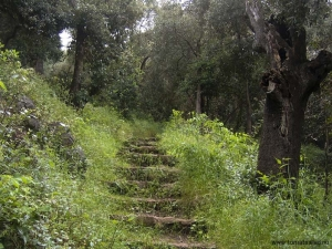 Stenlagd trappa i park