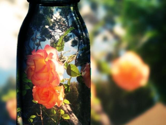 rosor på cap d\'antibes
