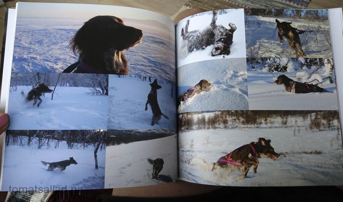 boken-om-hunden-51