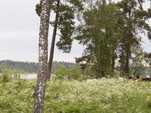 roslagsleden-9904-3