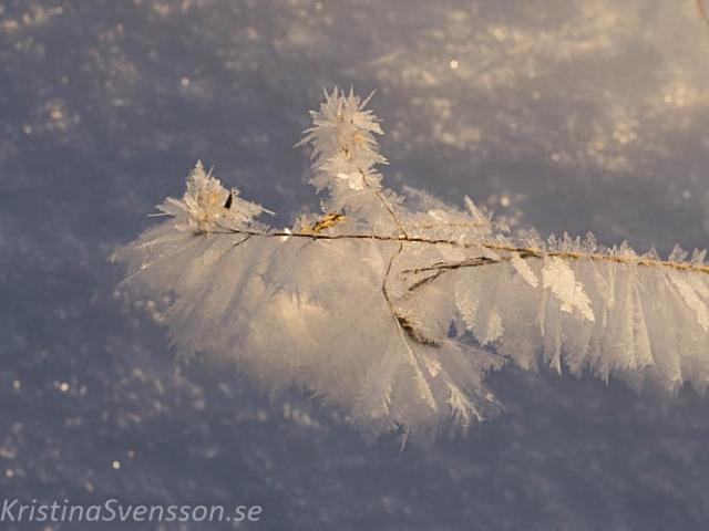 rimfrost-0717