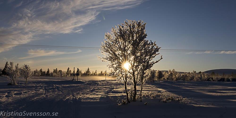 rimfrost-0671
