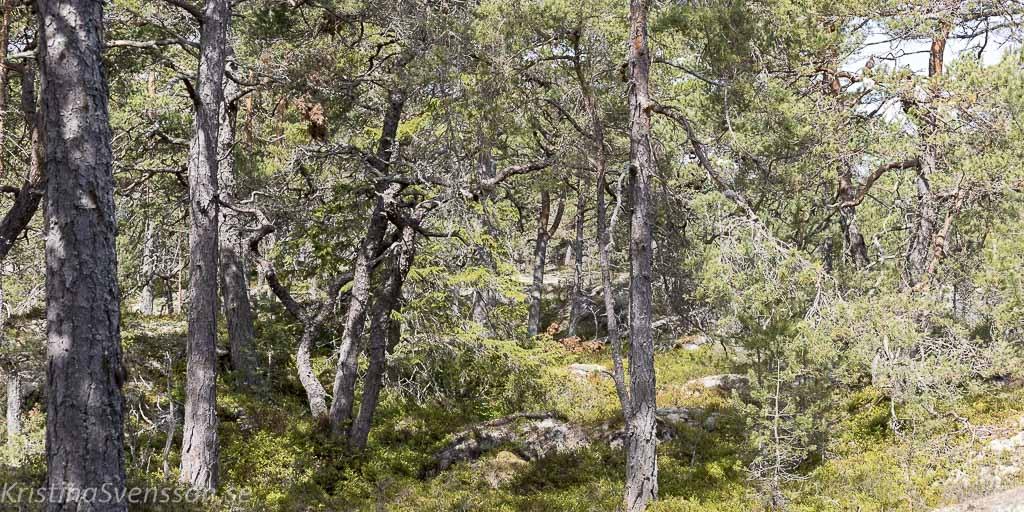 fjardlang-5687