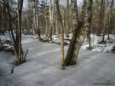 isig skogsstig