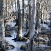 isig skogsdunge