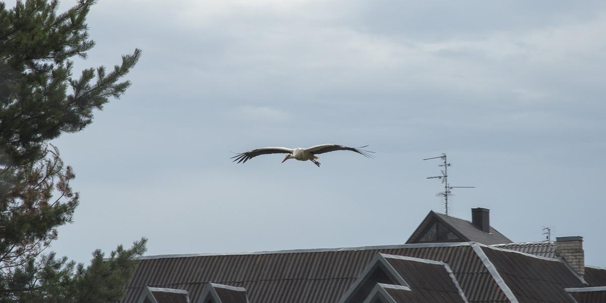 stork-9609