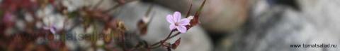 Oansenlig blomma