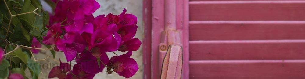 en header helt i rosa