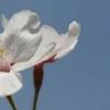 i-blom