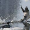 winter-header-bird-3