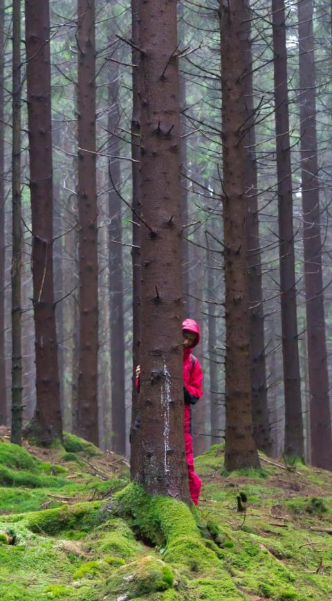 biologen i skogen