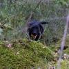 Stella i skogen