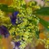 närbild på blommor