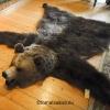 björnfäll