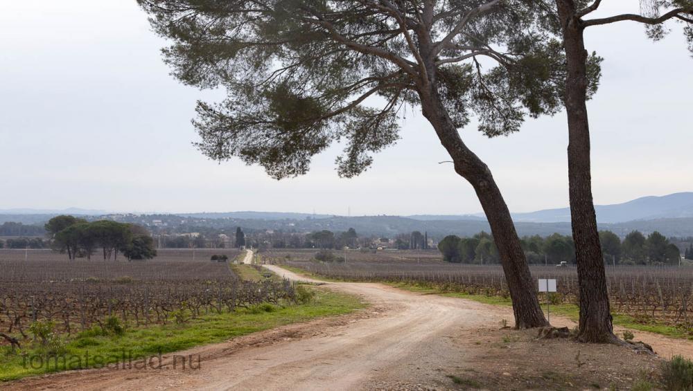 provence-9446