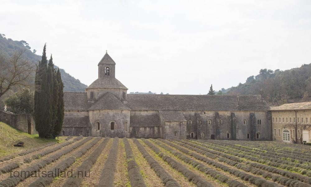 provence-abbaye-senanque-9829