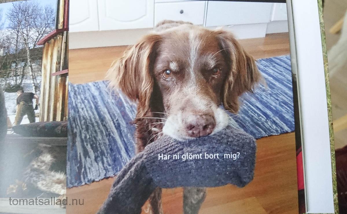 boken-om-hunden-49