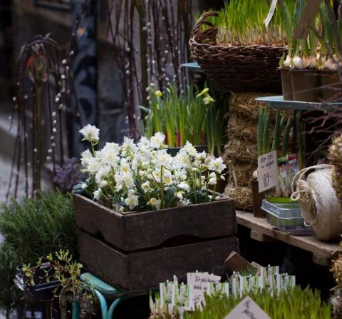 senvinterblommor utanför blomhandel