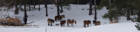 hästar vid Rönninge by