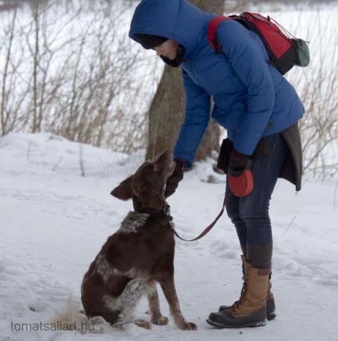 Hund + kompis + Rönningesjön