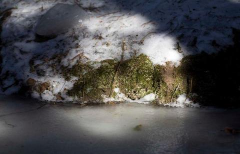 skog-0329