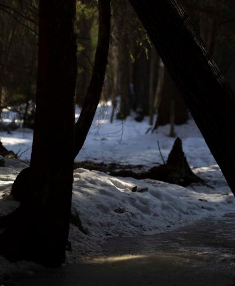skog-0332