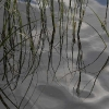 speglingar i sjön