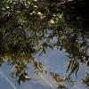 mer speglingar i sjön