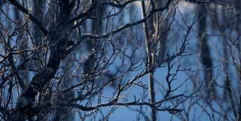 solen glittrar i rimfrost