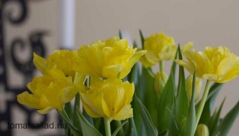 Glad påsk gula tulpaner