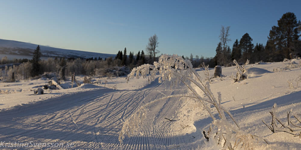 rimfrost-0706