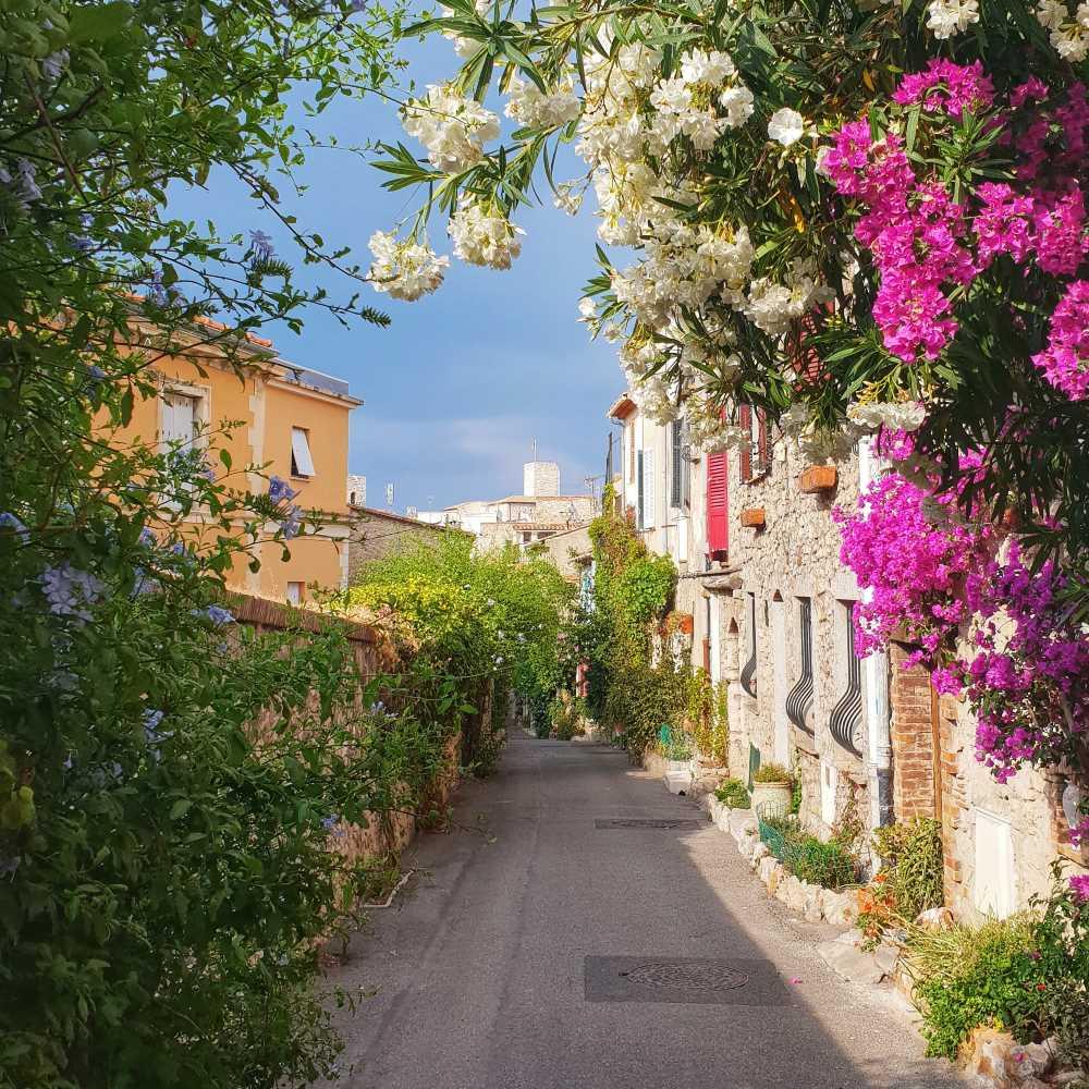 Safranier, Antibes