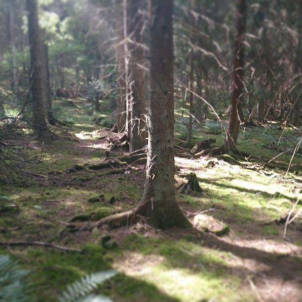 Skogslingan i Skarpäng