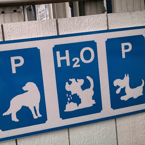 Flyg inte med hund till Nice flygplats