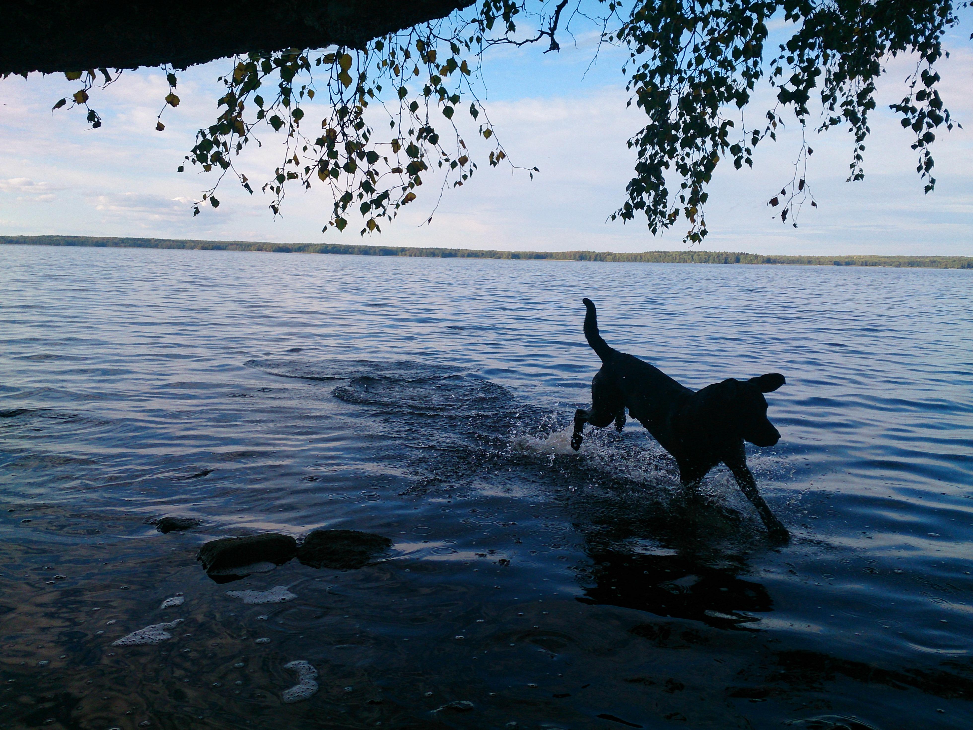 Lakrits i sjön Erken